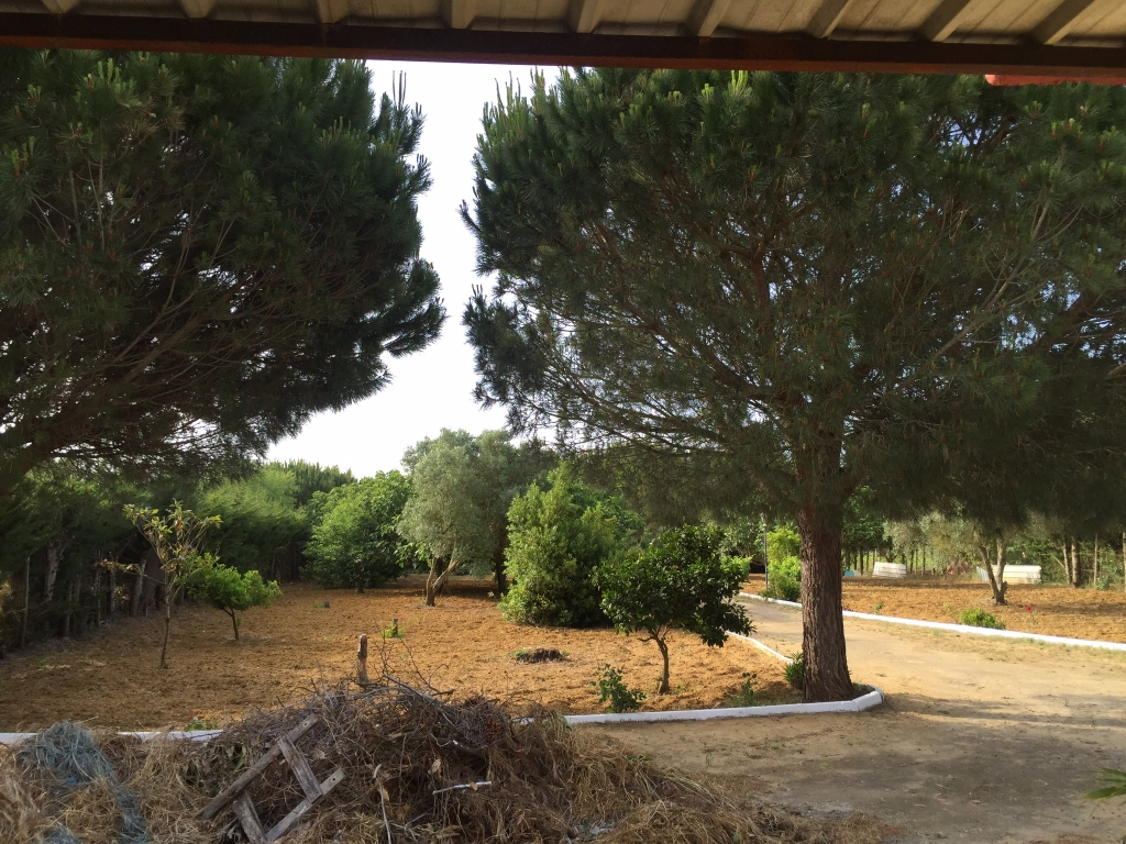 immobilien_properties_costadelaluz_chiclana_fincapagodelbueno2-1024x768